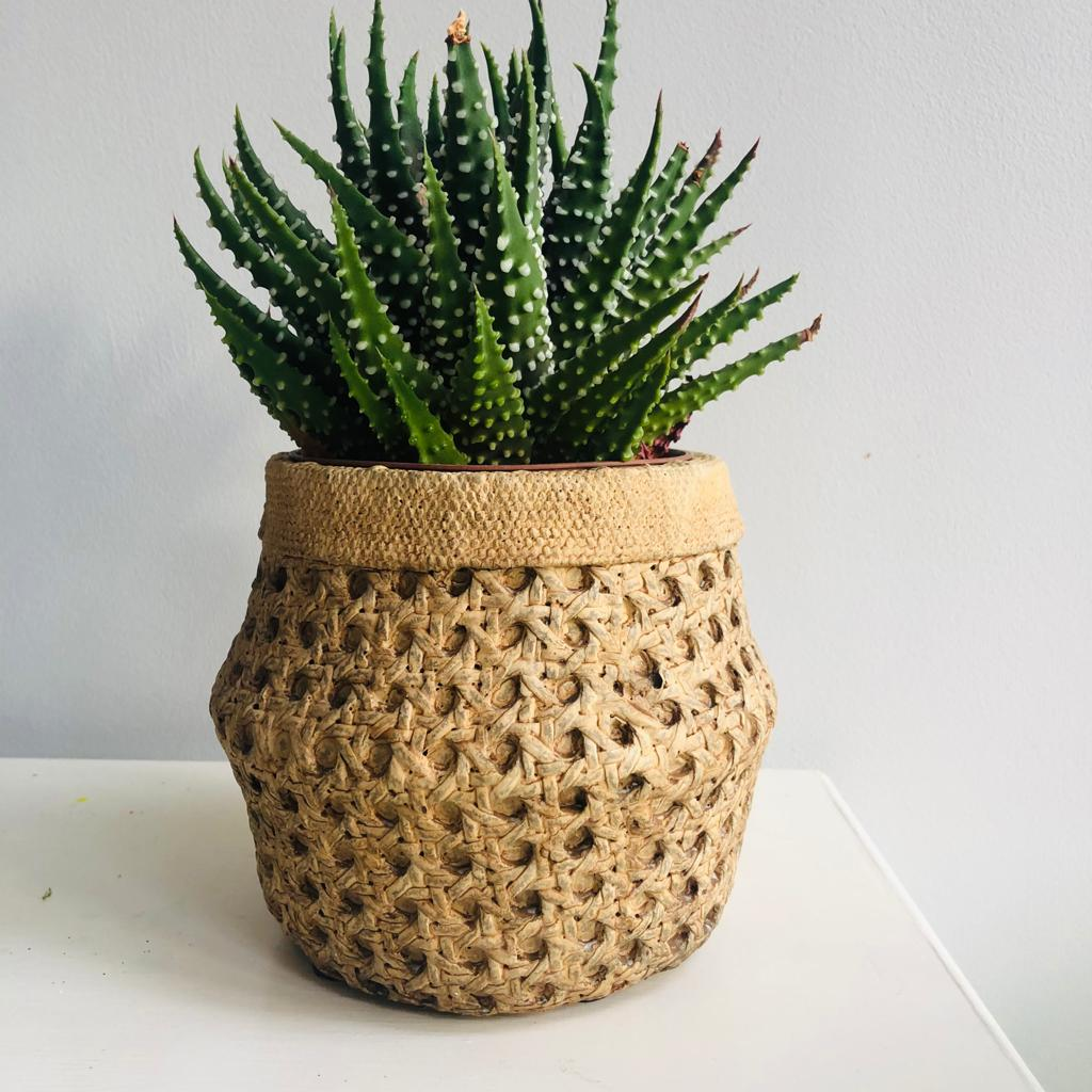 Cement Basket Effect Planter
