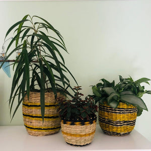 Small Coloured Seagrass Planters Set of Three