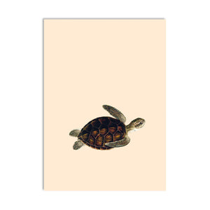 Come Together Turtle A6 Postcard - ad&i