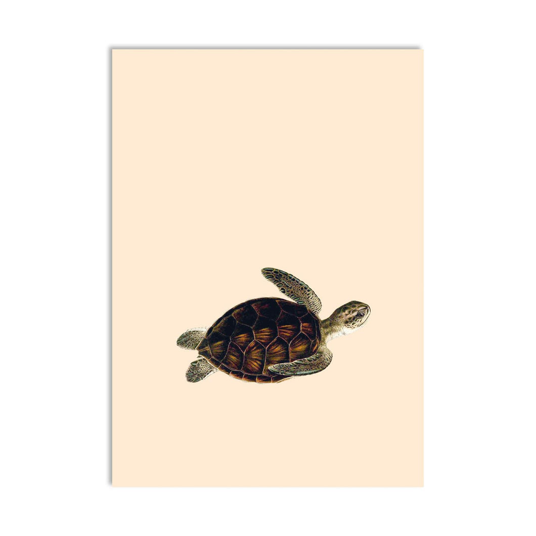 Come Together Turtle A6 Postcard