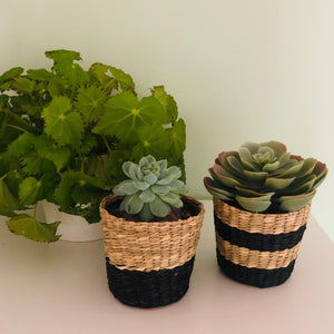 Set of Two Mini Black Stripe Seagrass Plant Pots