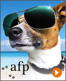 All For Paws Summer Collection