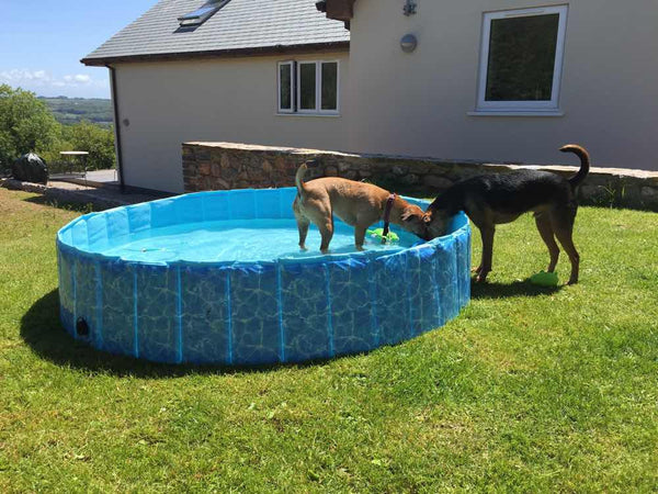 Active Hound dogs in the pool