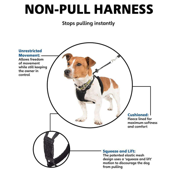 Company of Animals Non-Pull Harness