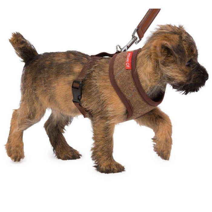 House of Paws Memory Foam Dog Harness