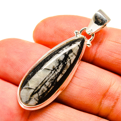 Orthoceras Fossil Pendants handcrafted by Ana Silver Co - PD744016