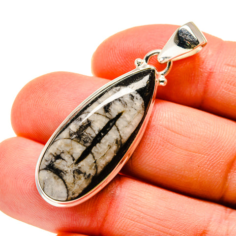 Orthoceras Fossil Pendants handcrafted by Ana Silver Co - PD745353