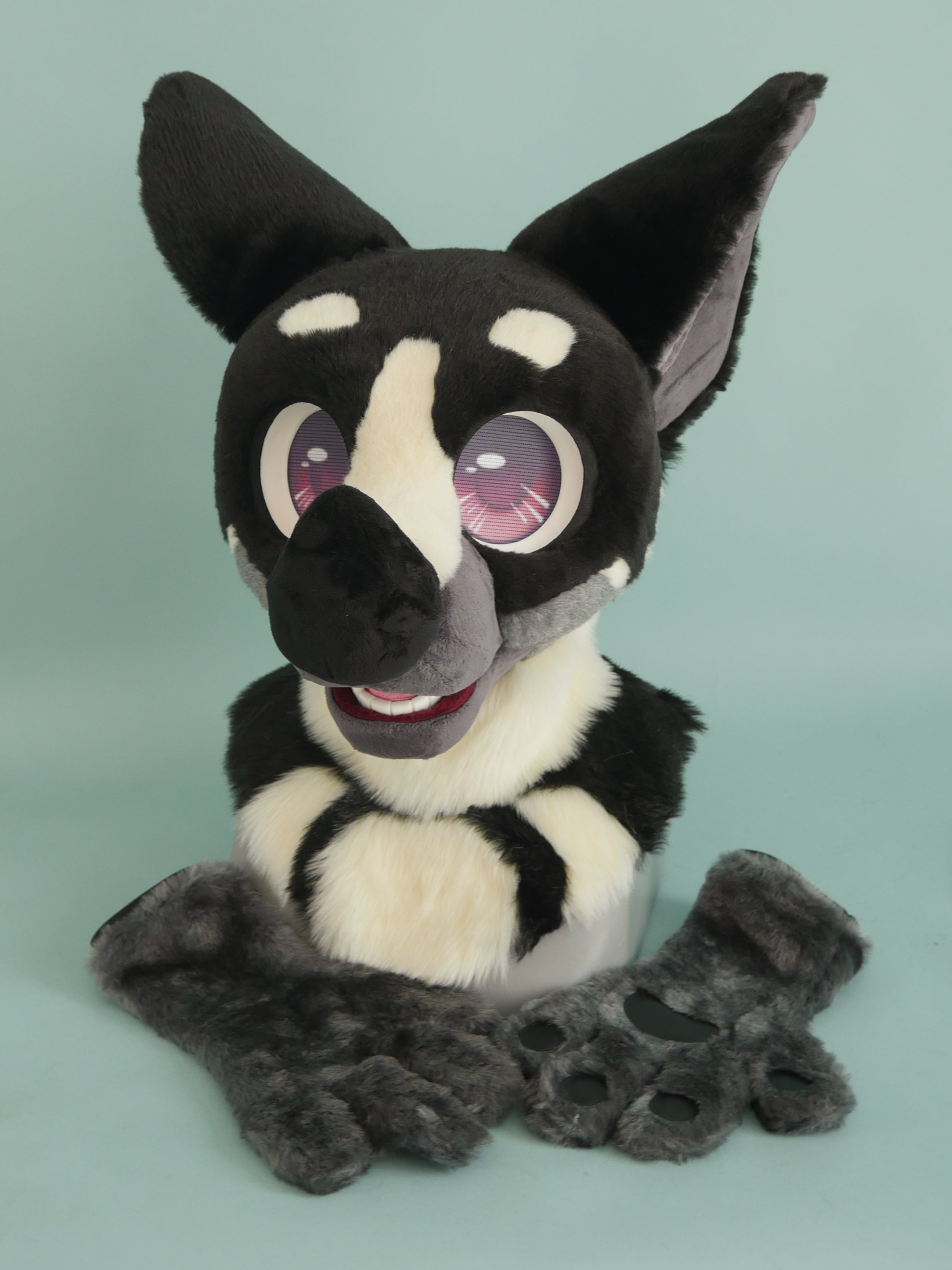 Pied Bat Partial