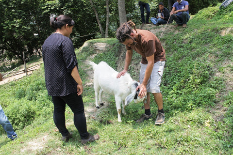 The Donkey Sanctuary Nepal - Jeevan the Goat