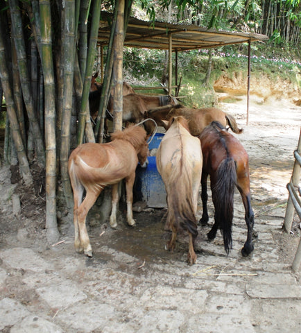 The Donkey Sanctuary in Nepal