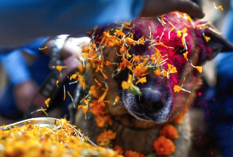 The World's Friendliest Festival for Dogs