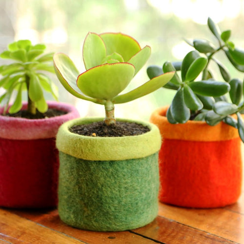 Surya Australia Felt Pot Plant Covers