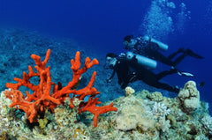 Diving for Sea Sponges