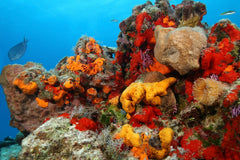 Sea Sponges Under The Sea
