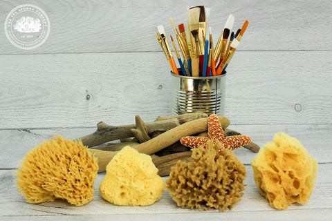 Sea Artist™ Natural Sea Sponge Variety Pack