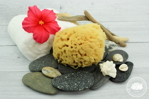 Sea Exfoliator Junior™ Yellow Sea Sponge for Facial Exfoliation