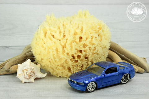"Sea Shine™ Professional Automobile Washing Sea Sponge (6"" - 7"") + Mesh Drying Bag"