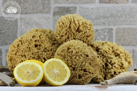 Sea Clean™ Raw Honeycomb Wool All-Purpose Sea Sponge