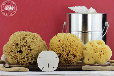 Sea Painter™ Natural Sea Sponges for Wall Sponging and Faux Finish Painting