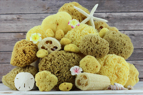 Compare & Choose Your Own Natural Sea Sponge