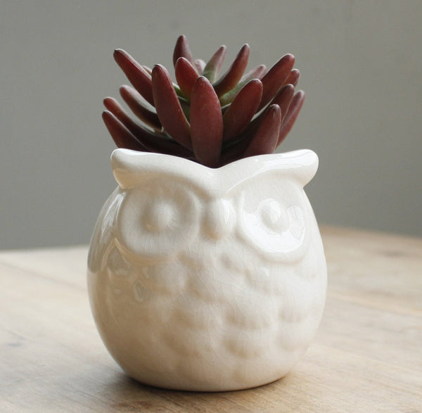 Ceramic Glaze Crackle Owl Creative Succulent Flower Plant Bonsai Pots
