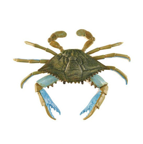 Safari  Crab