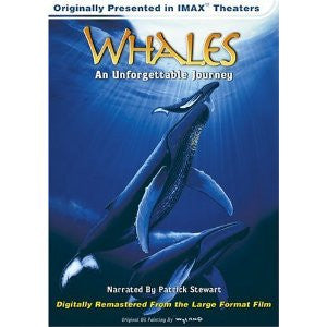 Whales An Unforgettable Journey