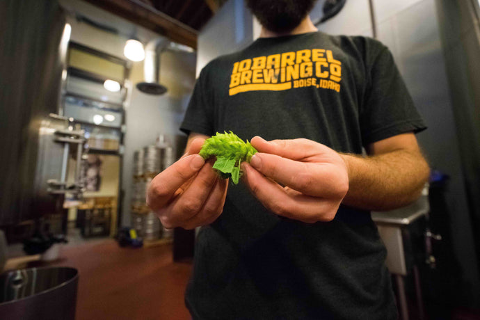 A Scientific Guide to Hop Aroma and Flavor, New Blonde Recipe, Braumeister Video, and More - Weekly Resource Email from June 7, 2019