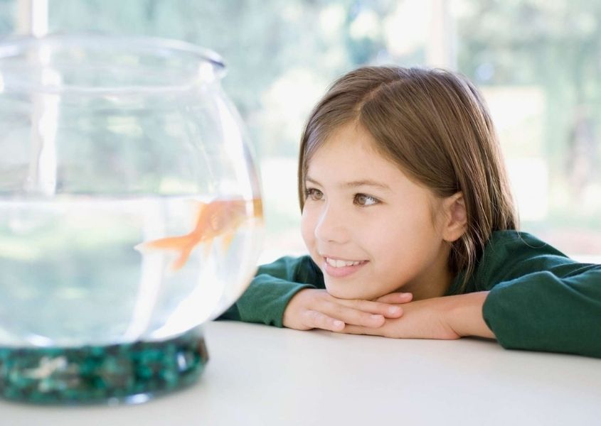 Young girl looking at a goldfish for 10 ways to create a happy home blog