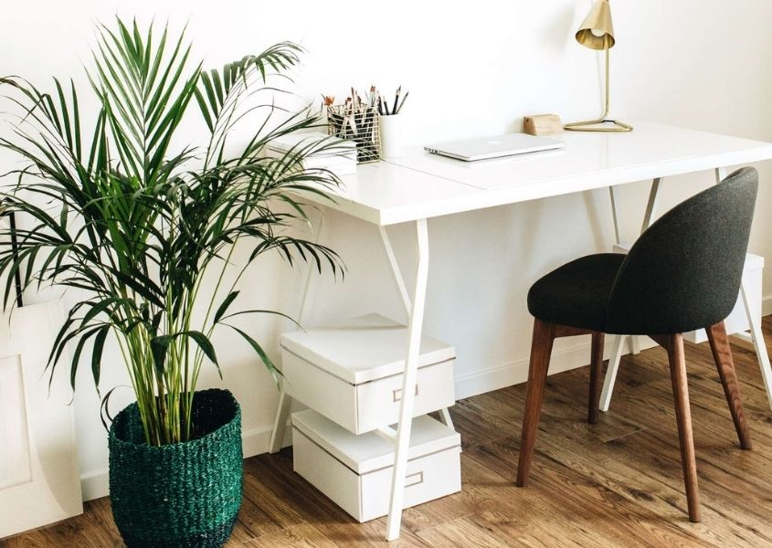 white paper boxes under white office desk with large green house palm