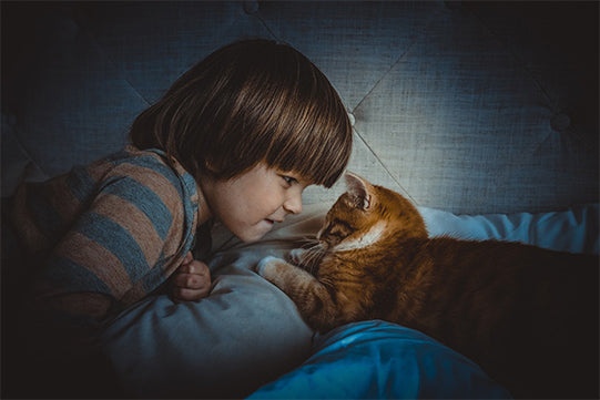 Cat and Boy on Sofa