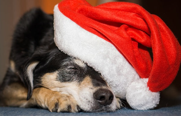 Christmas Hat Dog