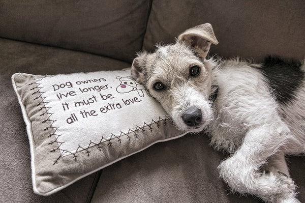 Dog on Sofa with Pillow