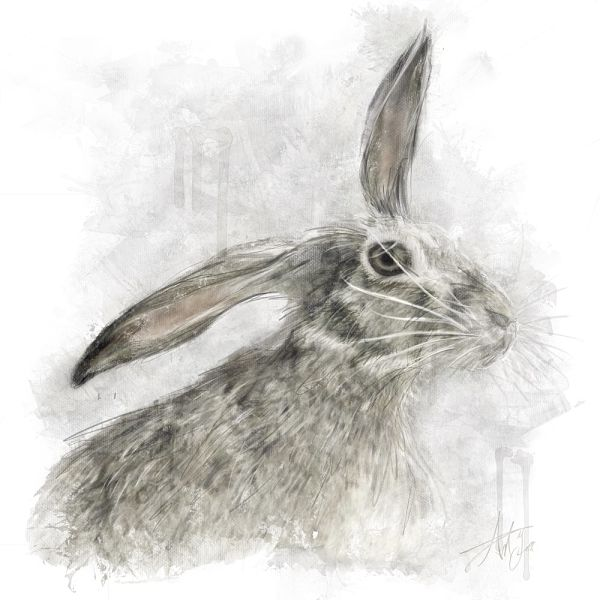 Grey Hare Canvas Wall Art
