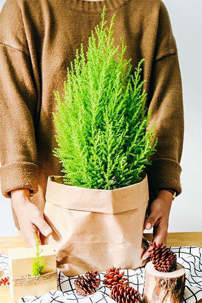 Woman Holding Small Natural Christmas Tree