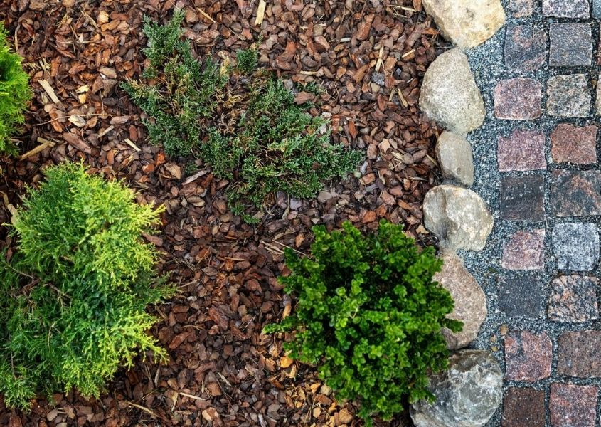 Woodchips and mulch on ground with green plants and side stone path
