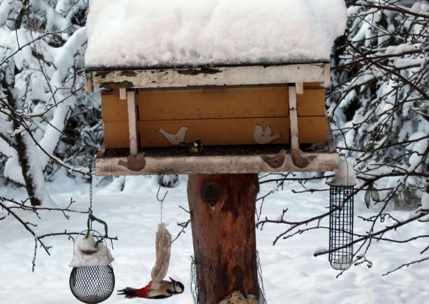 Wooden bird feeder in snowy woods with large pile of snow on roof