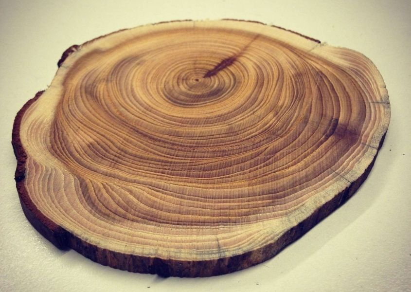 Circle of sawn wood showing growth rings
