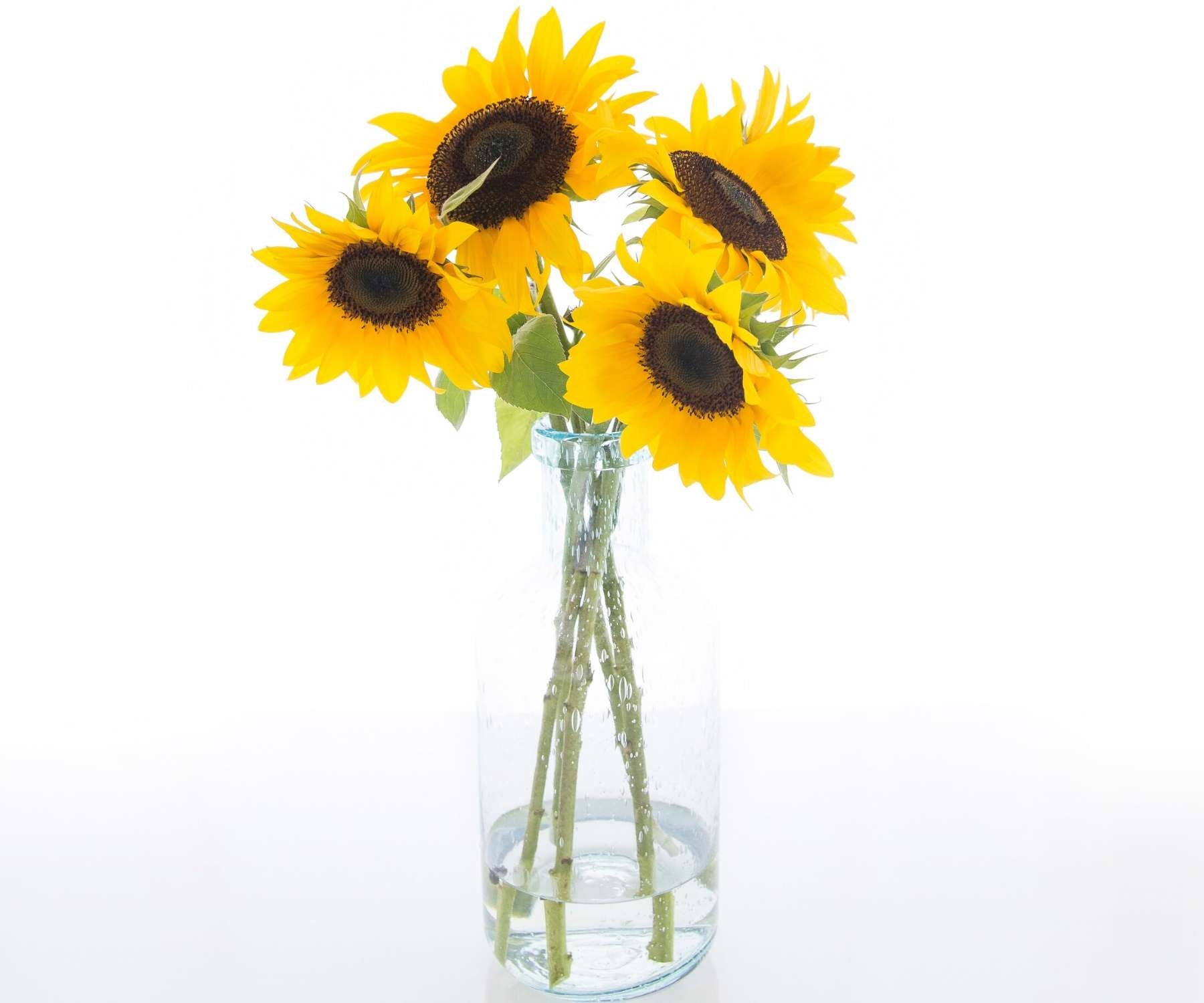 glass vase with sunflowers