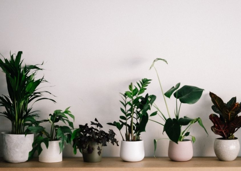 row of house plants in white pots