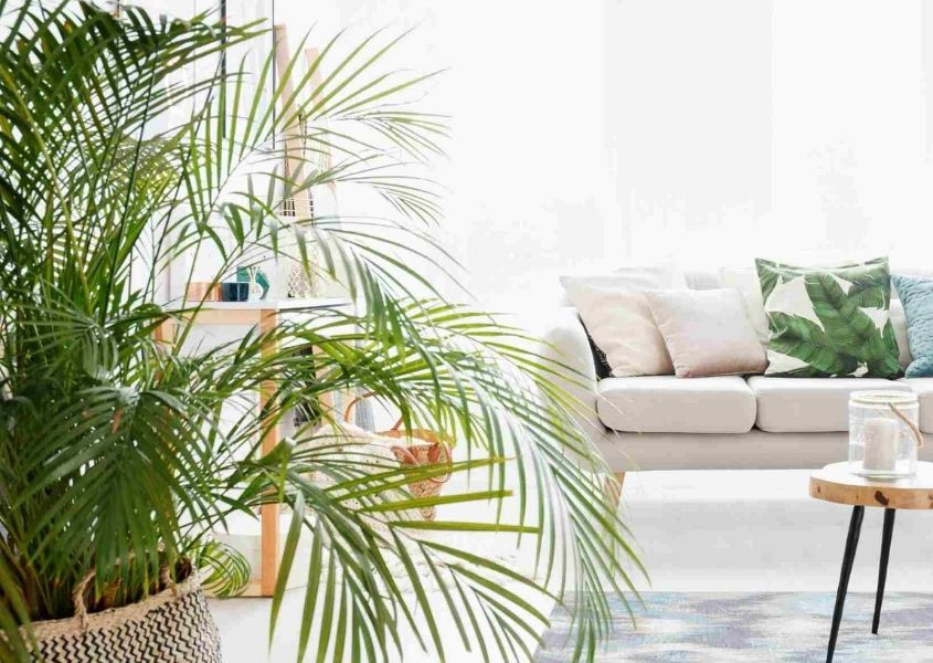 Large green houseplant with white sofa and window in background