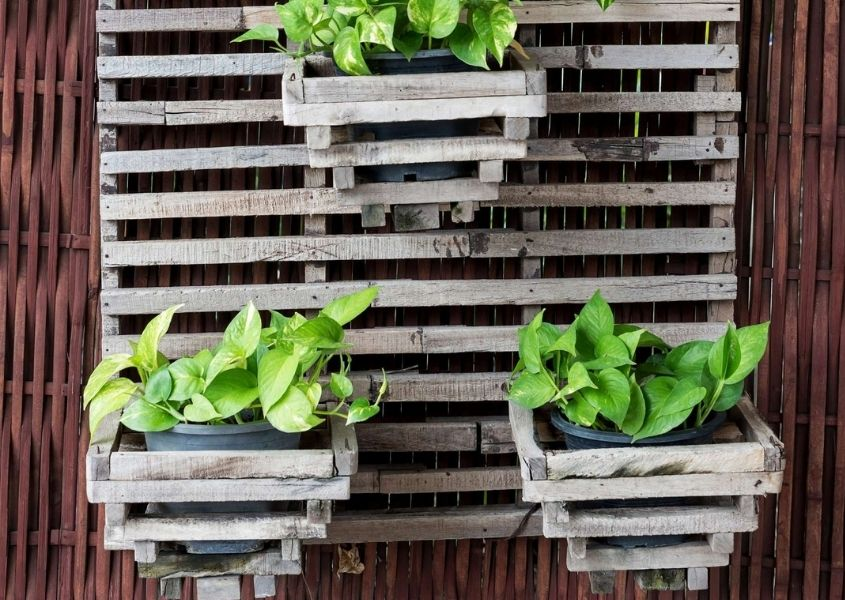Slatted wooden wall plant holder with green plants