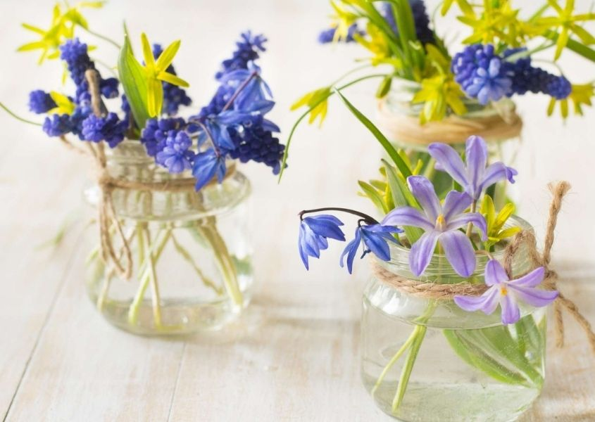 Glass jars with purple and yellow spring flowers