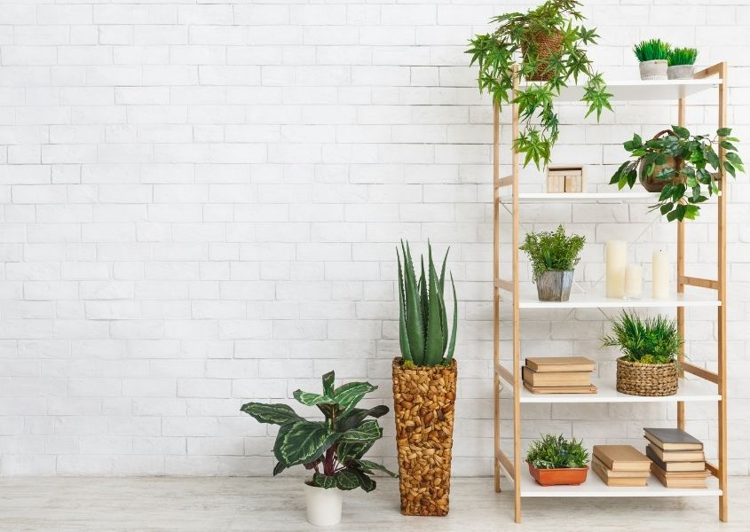 Wooden bookcase with hanging green plants for How to Style a Bookcase blog