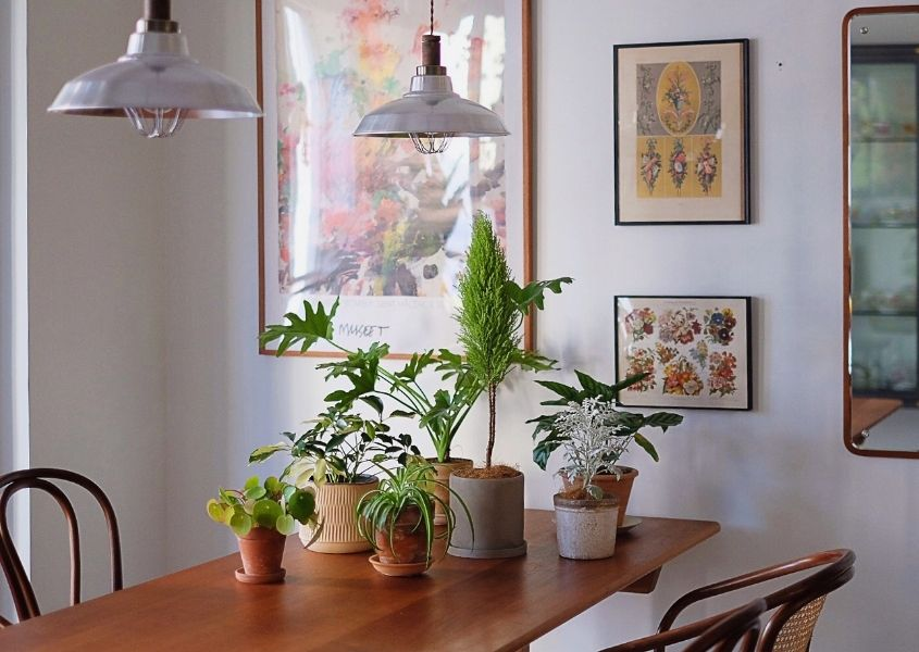 Wood dining table with white metal pendant lights and green plants