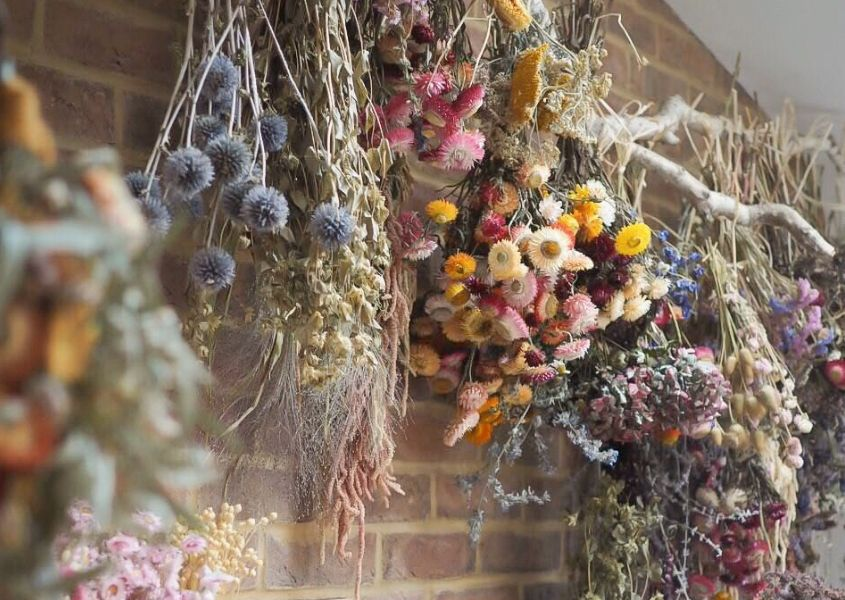 Variety of dried flowers hanging off a branch in a studio