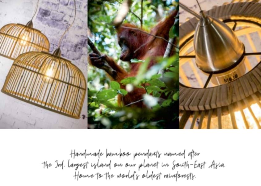 Multiple images of close up of bamboo pendant ceiling light, orangutan in jungle and hanging lights