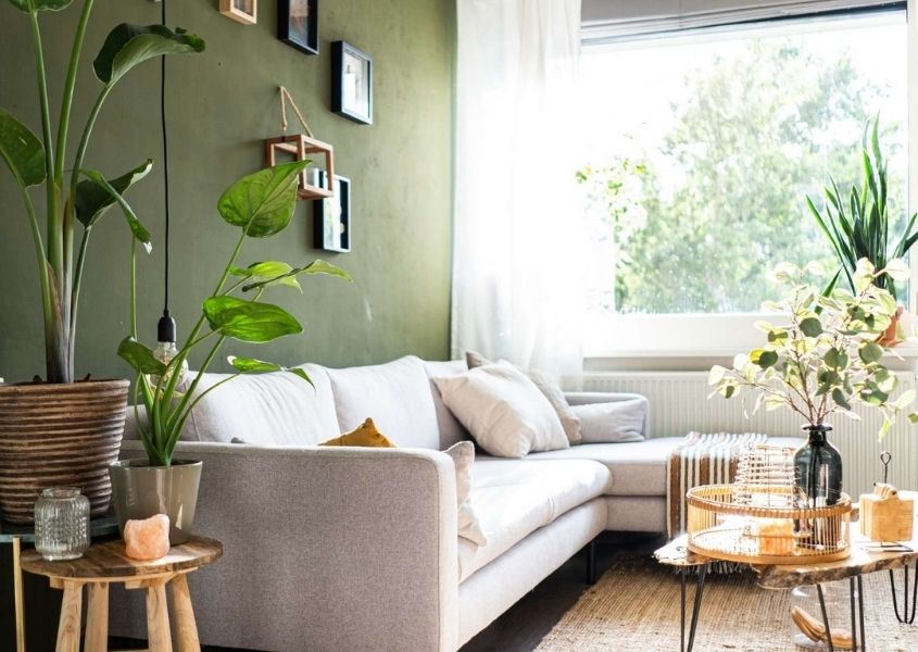 White modern sofa in living room with green feature wall and green plants