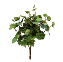 Load image into Gallery viewer, Grape Ivy Bush