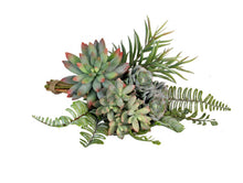 Load image into Gallery viewer, Succulent Bundle - Assorted